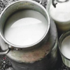 Andhra Pradesh: Automatic milk collection to boost farmers' revenue